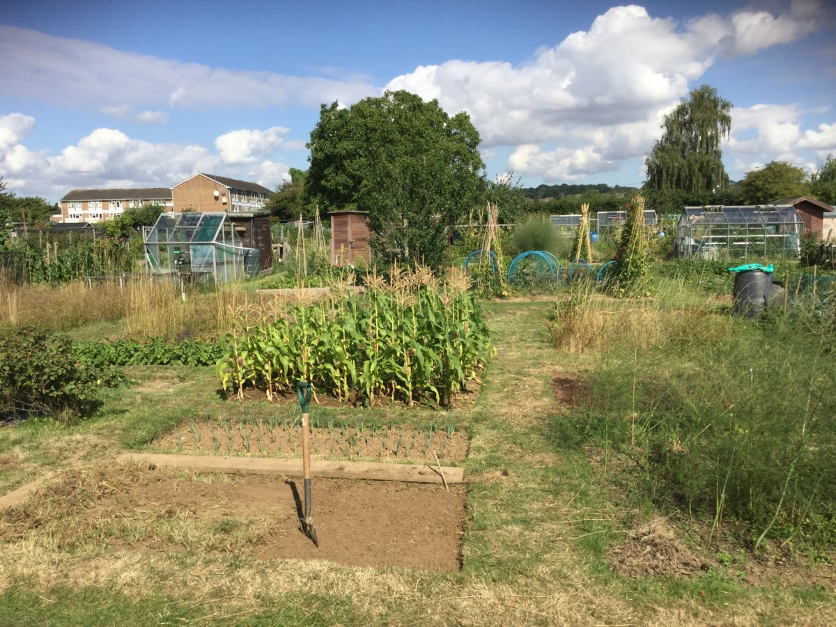 marlow allotments foxes piece