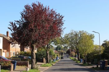 "Marlow Town Council and residents work together to ""releaf"" Marlow"