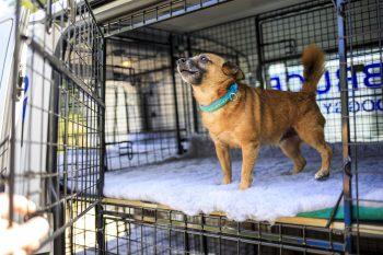 Door-to-door doggy day care arrives