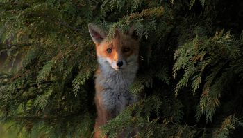 Wild Marlow's Photo Competition and Exhibition