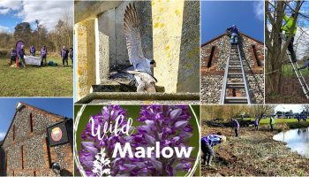 Wild Marlow update – March 2021